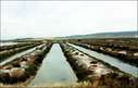 Image of Salinas de Barbate